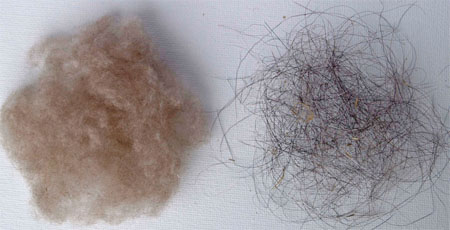 Dehaired fibers and guard hairs